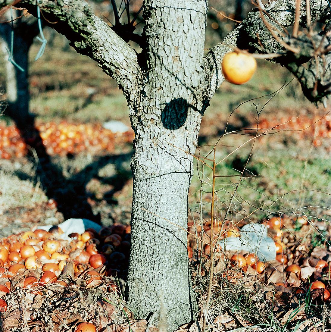 Guido Guidi, Lunario 1968-1999, stampa a contatto c-print, cm 24x30, © Guido Guidi, courtesy Viasaterna